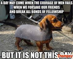 chainmail dog