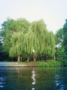 Wusstet ihr eigentlich, dass Berlin so schön grün ist? ;-)