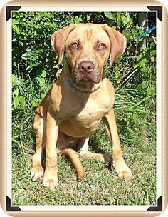Act quickly to adopt ZACK. Pets at this Shelter may be held for only a short time.
