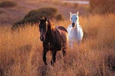 Ready to eat horses: 6 descriptions of the taste of horse meat All The Pretty Horses, Beautiful Horses, Animals Beautiful, Cute Animals, Beautiful Sunset, Farm Animals, Two Horses, Wild Horses, Zebras