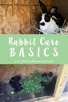 So you want to start your homestead rabbit journey, and you're not sure where to begin. What do they eat? How much do they eat...