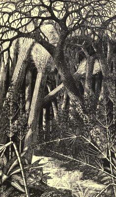 Carboniferous forest scenes by Heinrich Harder, Bruce Horsfall, & W. C. Smith: The Carboniferous is a panoply, an exhibition, a theater of increasing complexity, a demonstration...