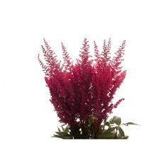 red astilbe - Google Search