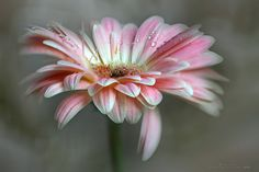 BEAUTY by Charo  Arroyo on 500px