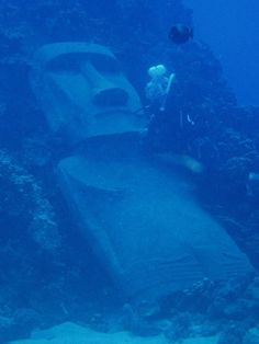scuba diving at Easter Island - I've never seen one of these underwater before.  @Shereice Harker Island