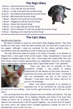 Use this for a Point of View lesson and the students have to write a diary from the bird's point of view. Crazy Cat Lady, Crazy Cats, Hate Cats, Dumb Cats, I Love Dogs, Puppy Love, Funny Image Photo, Pugs, Funny Images