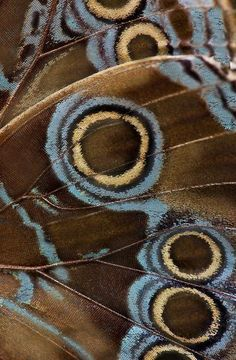 Macro photography of a butterfly wing Patterns In Nature, Textures Patterns, Art And Illustration, Bugs, Foto Macro, Wow Art, Butterfly Wings, Blue Butterfly, Grafik Design