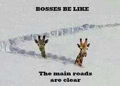 Bosses be like the main roads are clear. (Not mine, they were actually awesome about it)