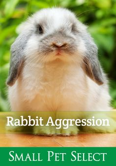 Uh-oh.did your sweet rabbit turn into a Bunzilla? 👿 What do you do when your cute little bun lunges, nips, growls, or attacks? Learn the signs and how to help correct aggressive rabbit behavior. Aggressive Rabbits: What To Know And How To Help Rabbit Run, House Rabbit, Pet Rabbit, Rabbit Behavior, Lunges, Rabbits, The Selection, Signs, Pets