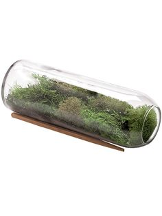 Moss Terrarium Bottle Kit | Terrarium Supplies | Gardener's Supply