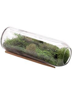 Moss Terrarium Bottle Kit | Terrarium Supplies | Gardener's Supply