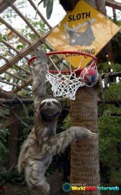 Dunking sloth