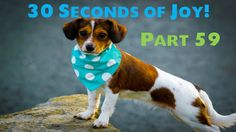 30 Seconds of Joy! Part 59! Caught in the Act!?