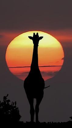 Africa... by Jan Pleiter on 500px