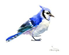 Bird Artwork, Blue Jay, original one of a kind watercolor painting by ORIGINALONLY on Etsy