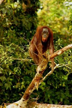AVOID PALM OIL!  Palm oil is in over 50% of all products in the US ... from cookies, peanut butter, make-up, shampoos, box goods, candy, and a lot more. The way it is being produced is unsustainable, and causing orangutans and other species to go into extinction.