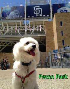 237 Best Modern Dog Magazine Star Dog Contest Images Dog Doggies