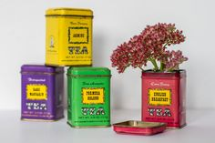 Storing tea in the fridge – the experts weigh in — The Tea Squirrel