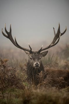 """beautiful-wildlife: """" The King of Richmond Park by Jan Mewald """""""