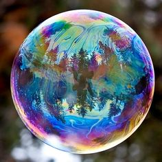 trees reflected in bubble - must try bubble photography