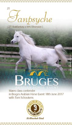 ZT Fanpsyche in Bruges Arabians Event