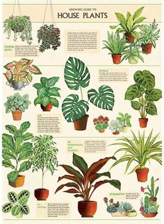 House Plants Hanging, House Plants Decor, Garden Plants, Easy House Plants, Tropical House Plants, Plants In The Home, Plants For Room, Indoor House Plants, Indoor Plant Decor