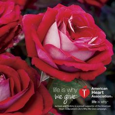 Buy 'Our Lady of Guadalupe' ™ Roses for MaximumBlooms with Minimal Care at Jackson & Perkins! Types Of Herbs, Starting Seeds Indoors, American Heart Association, Growing Roses, Hybrid Tea Roses, Organic Gardening Tips, Indoor Gardening, Flower Tea, Grateful Heart