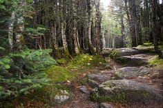 Appalachian Trail, NH