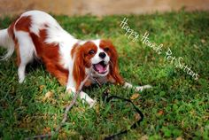 Happy Hounds Pet Sitting and Dog Walking in Burleson TX - Google+