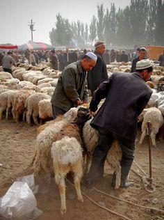 Animal Market . Kashgar, China