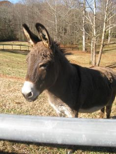'Willow'  cutest donkey of all!