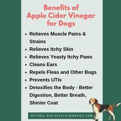 What are the benefits of apple cider vinegar for dogs? Is apple cider vinegar safe for dogs? How to use acv to treat various canine health problems, such as itchy paws, skin and ear problems? Can acv be used as a flea repellent? Apple Cider Vinegar Remedies, Apple Cider Vinegar Benefits, Cider Vinegar Weightloss, Skin Problems, Health Problems, New Tricks, Dog Care, Natural Remedies, Baby Shower