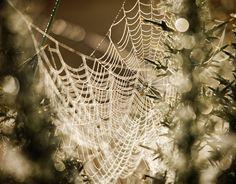 """Morning Spiderweb"" by Gary McParland. #gary_mcparland #morning #spiderweb #light #strands #dew #macro"