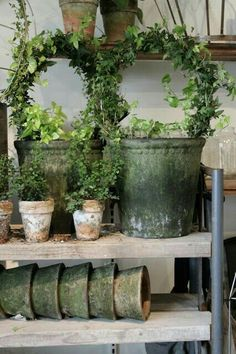 Topiary Topiaries and terra cotta pots Container Plants, Container Gardening, Gardening Tips, Small Gardens, Outdoor Gardens, Bloom Where You Are Planted, Garden Styles, Garden Pots, Potted Garden