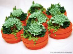 potted plant cookies....:)