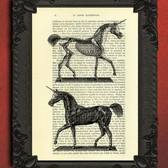 unicorn anatomy dictionary art print  unicorn art by MadameMemento