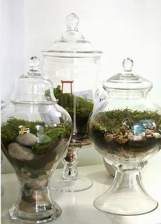 Terrarium: These were features at this weekend's women's retreat... LOVELY creations! Want to make one for my house.