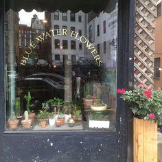 Flowers, Home Decor, Decoration Home, Room Decor, Royal Icing Flowers, Home Interior Design, Flower, Florals, Floral