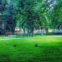 Caminhando meio que sem rumo por Sodermalm em Estocolmo encontramos esse parque com alguns coelhos e várias pessoas transitando. Andamos mais um pouco e descobrimos que não era um parque. Era um cemitério! Mas isso não afetou em nada a nossa percepção da beleza do lugar. #malasepanelas #estocolmo #natureza #latergram #parque #cemiterio #fotodeviagem #escandinavia #verde #paz