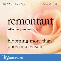 Dictionary.com's Word of the Day - remontant - (of certain roses) blooming more than once in a season.