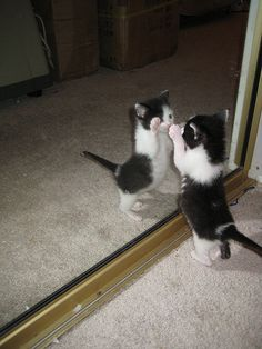 there is another cat like me. oh!