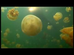 Swimming with Jellyfish! How peaceful!