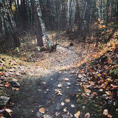 Single track fall paradise. #mountainbike #singletrack #biking #fall #cycling