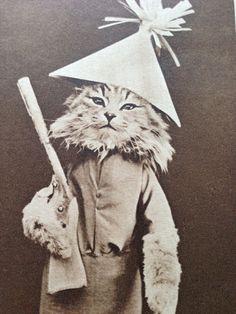 Postcard アンティークポストカード 可愛い猫の兵隊さん絵葉書兵士 インテリア 雑貨 家具 Antique ¥800yen 〆05月19日