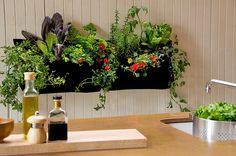 Woolly Pocket  Vertical Garden Kit