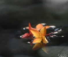 Dragon's Pool | H Hugh Miller  #photography #flower #floating #water #art #artwork #artist #fineart #abstract #blurry