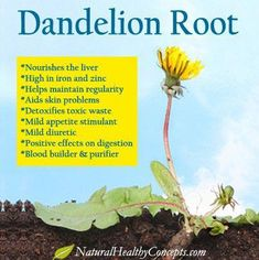 Dandelion Root Health Benefits I have used Dandelion Root tea for many years now One cup a day is all you need It is expensive and as a result you will look at the dandel. Matcha Benefits, Lemon Benefits, Coconut Health Benefits, Natural Cures, Natural Health, Dandelion Root Tea, Dandelion Benefits, Tomato Nutrition, Nutrition Tips