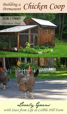 * Lovely Greens *: Building a Permanent Chicken Coop