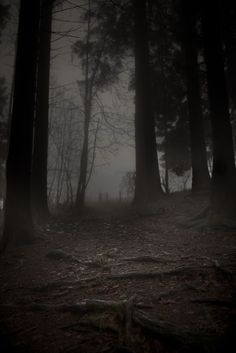 Nyctohlophobia - Fear of the Dark Wooden Areas of the Forest at Night