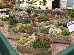 Succulents in Rock Planters at the RHS Hampton Court 2013 - The Floral Marquee